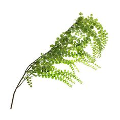 Weeping Fern Stem by Ashland ❤ liked on Polyvore featuring home, home decor, floral decor, flower stem, flower arrangement and flower home decor