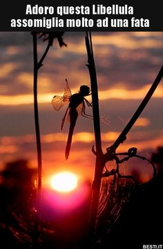 Dragonfly that looks like a fairy. Amazing Photography, Nature Photography, Dragonfly Photography, Horse Caballo, Gossamer Wings, Dragonfly Art, Beautiful Sunset, Ciel, Natural World