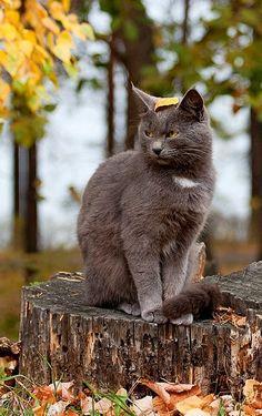 Cat Portrait - Autumn Leaves | Flickr - Photo by Pet-Boy