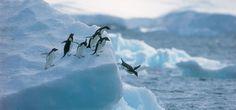 Preservar la Antártida es crucial en la lucha contra el Cambio Climático - http://www.meteorologiaenred.com/preservar-la-antartida-crucial-la-lucha-cambio-climatico.html