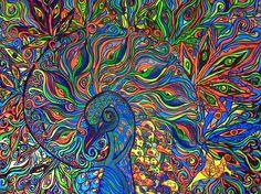 peacock Art    Nautilus Peacock Painting