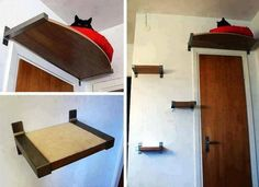 where is the cat  :)