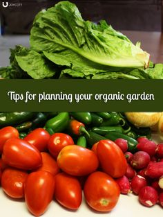 Tips for Planning Your #Organic #Vegetable #Garden. on @Joycottcom. The first in a series I'm writing for the Joycott blog.