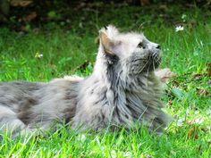 Lady - vedette de notre CONCOURS Photo mensuel chat, chien, animaux. participez ici >> http://www.verlina.com/concours-photo.php