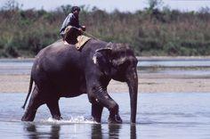 Olifant in Nepal Nepal, Elephant, Boys, Bucket, Animals, Places, Design, Baby Boys, Animales