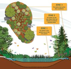 Photo: Washington State Department of Ecology, - Typical three-zone rain garden. Photo: Washington State Department of Ecology, 2013 - Bog Garden, Garden Site, Rain Garden, Shade Garden, Garden Plants, Outdoor Restaurant Design, Rainwater Harvesting System, Plant Zones, Rain Photography