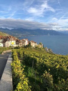 The Lavaux UNESCO World Heritage Vineyards in Vaud. A walk thrugh one of the most scenic areas of Switzerland with the terraced vineyards. Places To Travel, Places To Visit, Swiss Travel, Walking Routes, Going On Holiday, World Heritage Sites, Switzerland, Festivals, Travel Inspiration