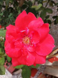 El amor del cielo sigo anhelando... Y mientras tanto, como una marioneta de mi amado Kermes, sigo esperando.  #rojo #carmesí #amor #florroja Plants, Amor, Waiting, Thinking About You, Te Amo, Puppet, Sky, Red, Colors