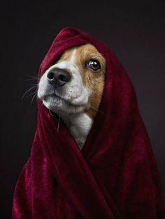 Il colore e' poesia dell'anima #beagle