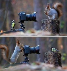 Tut gut! Probier es aus. Wieso? Es hilft der neue Perspektiven zu sehen. Most Beautiful Birds, Animals Beautiful, Beautiful Scenery, Beautiful Images, Wildlife Photography, Animal Photography, Micro Photography, Canis Lupus, Funny Animals