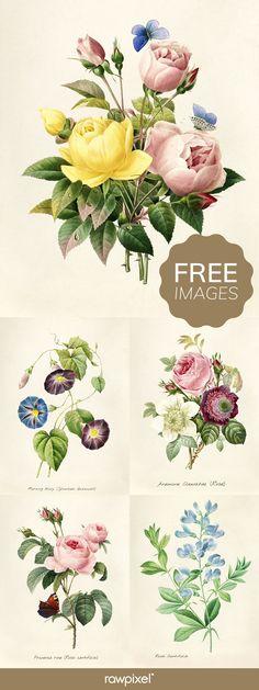 New Vintage Nature Photography Flowers Ideas Vintage Nature Photography, Nature Photography Flowers, Free Printable Art, Free Printables, Joseph, Plant Illustration, Free Graphics, Botanical Prints, Free Images