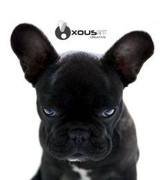cara de #lunes  #dog #perro