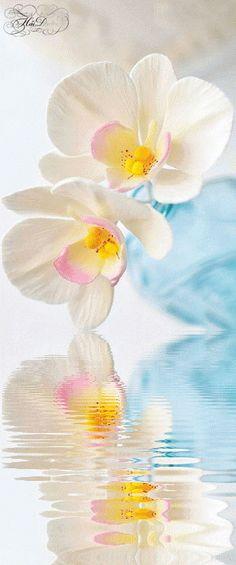 Анимация красивые цветы