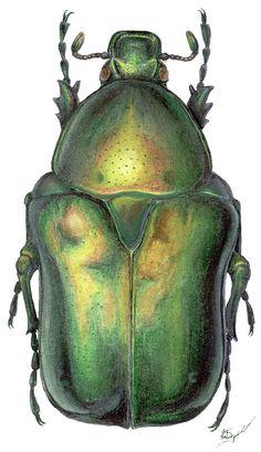 Green sheen ~ETS #beetle