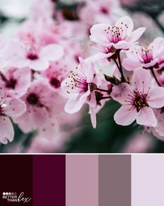 home Color Schemes - Purple Garden Color Palette Idea. Maroon Color Palette, Color Schemes Colour Palettes, Colour Pallette, Color Palate, Purple Color Combinations, Purple Color Schemes, Purple Palette, Purple Garden, Colorful Garden