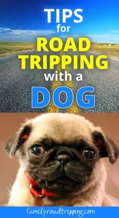 5 Tips for Road Tripping with a Dog - Our puppy was too little to board and we hated leaving him with family since he was so young. So we packed him up with the kids and headed out. Here are a few things we learned along the way about traveling with a dog.