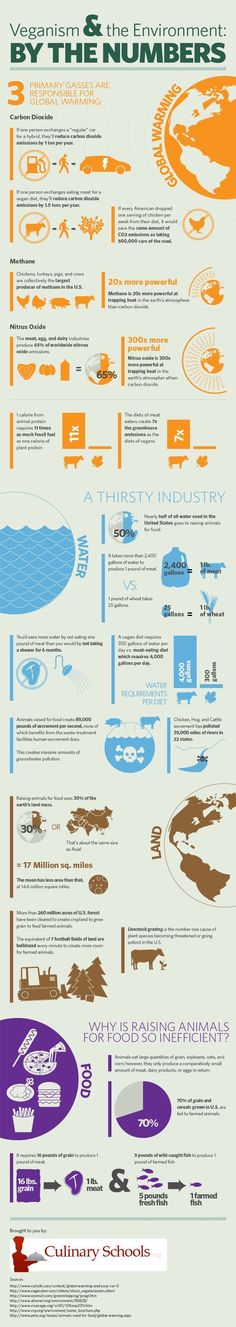 Climate change is a pretty serious problem. Detractors tend to think that a few degrees warming or cooling won't make that much of a difference, but the biosphere is fragile, and abrupt changes of any kind can create a domino effect. This awesome infographic shows us some of the impacts of eating meat, or choosing …