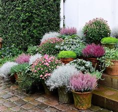 I'm now taking the last pictures for my new book about pot arrangements. What do you think? Potted Plants Patio, Garden Planters, Herb Garden, Container Plants, Container Gardening, Pot Jardin, Dream Garden, Garden Planning, Garden Inspiration
