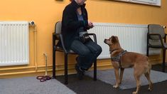 Mit dem 10-Leckerchen-Spiel lernt der Hund, längere Zeit ruhig abzuwarten, auch wenn er sehr aufgeregt ist und es ihm ganz wichtig ist, ans Ziel seiner Begierde zu kommen. Wie funktioniert's?   Du brauchst eine Schüssel oder einen Beutel mit Leckerchen