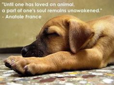 """Until one has loved an animal, a part of one's soul remains unawakened""""- Anatole France Puppy Quotes, Animal Quotes, Horse Quotes, Cute Puppies, Cute Dogs, Dogs And Puppies, Doggies, Fun Dog, I Love Dogs"""
