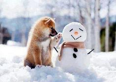 Shiba Inu consulting a snowman...