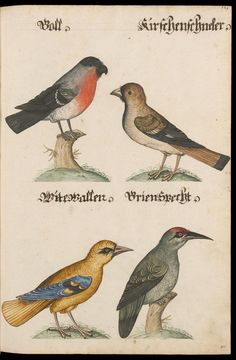 [Aquarelle von Säugetieren, Vögeln, Insekten und Pflanzen samt deutschen Legenden] / [N.N.] Author, Contributors	N.N. Wikipedia Place and Date of Creation [Süddeutschland], [16--] Physical Description	228 Bl. : Ill. ; 42 x 29 cm Language	German Providing Institution	Zentralbibliothek Zürich, Ms Rh hist 161.