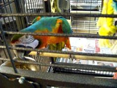 Tour of A Place to Call Home/Ollies Parrots Perch