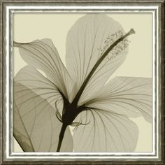 "Amanti Art Hibiscus by Steven N. Meyers, Framed Canvas Art - 20.74"" x 20.74"" - DSW01342"