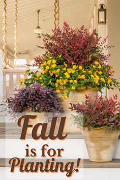 Fall is a time of rejuvenation -- and growth -- in the garden. Which plants benefit from fall planting, and why? Find out here. #southernliving #fallplanting #fallgardening