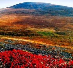 Ruska = autumn colors in Lapland, Finland Great Places, Places To Go, Beautiful Places, Beautiful Pictures, Meanwhile In Finland, Lappland, Excursion, Seen, Helsinki