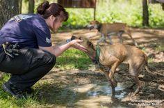 ARC Pitt Bull rescue in Iola, MS