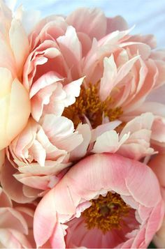Peonies along with white cala lillies these are my favorite flower...especially in this beautiful blush pink color