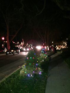 Christmas Tree Lane in Palo Alto, CA  This is a fun place to go during the Christmas season!