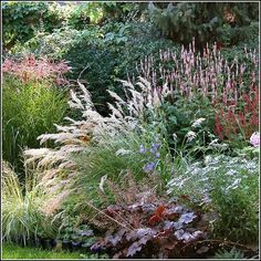 Lovely planting of grasses, Persicaria, daisies and Heuchera. Lovely planting of grasses, Persicaria, daisies and Heuchera. Prairie Garden, Garden Cottage, Prairie Planting, Landscape Design, Garden Design, Patio Design, Australian Garden, Heuchera, Garden Borders