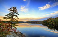 Pine tree on granite bedrock of Canadian Shield in Muskoka cottage country in Ontario Canada Countries To Visit, Places To Visit, Newfoundland And Labrador, Pine Tree, Lonely Planet, Natural Wonders, Watercolours, Landscape Art, Granite