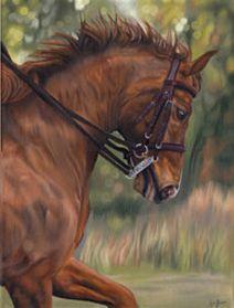 Danny dressage horse