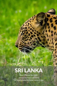 The best places to visit in Sri Lanka and the top things to see and do.