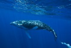H Whales20090821 Moheli57 by ssscaglia, via Flickr