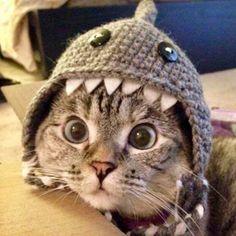 Precious CatShark! LOVE Cats  SLVH ♥♥