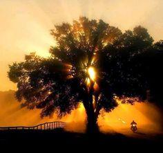 Blog des Smootards Lurrons: Ailleurs... sous un arbre