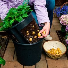 Kartoffel-Pflanztopf PotatoPot(R) - Kartoffeln