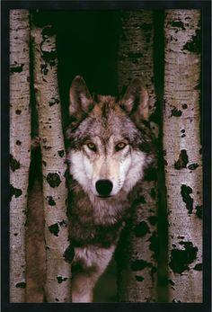 Amanti Art Gray Wolf Wall Art Satin Black AA577200 - LampsUSA