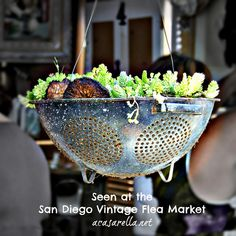 Succulents planted in a (hanging) colander. DIY - awesome - could see like 10+ of these hanging.