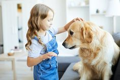 Cuddling dog Do Golden Retrievers Need A Lot Of Attention Psychiatric Service Dog, Curly Coated Retriever, Nova Scotia Duck Tolling Retriever, Amphibians, Reptiles, Guide Dog, Therapy Dogs, Happy Dogs, Dog Love