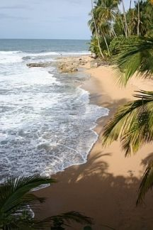 Travel with us to Costa Rica, proceeds benefit wildlife conservation efforts. www.seethewild.org