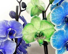 Segredo das Orquídeas: Substratos para Orquídeas
