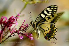 http://ift.tt/1ZY8ZTJ #Nature breathtaking #Photos A flying flower !! by CILIN http://ift.tt/1NPUBAO