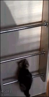 How one kitten gets ready to sleep--click through for gif.