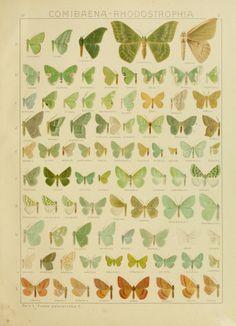 Bd. 4 plates - Die Gross-Schmetterlinge der Erde : - Biodiversity Heritage Library