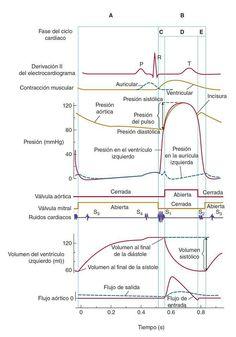 Fases del ciclo cardíaco vía @recursosbibliog